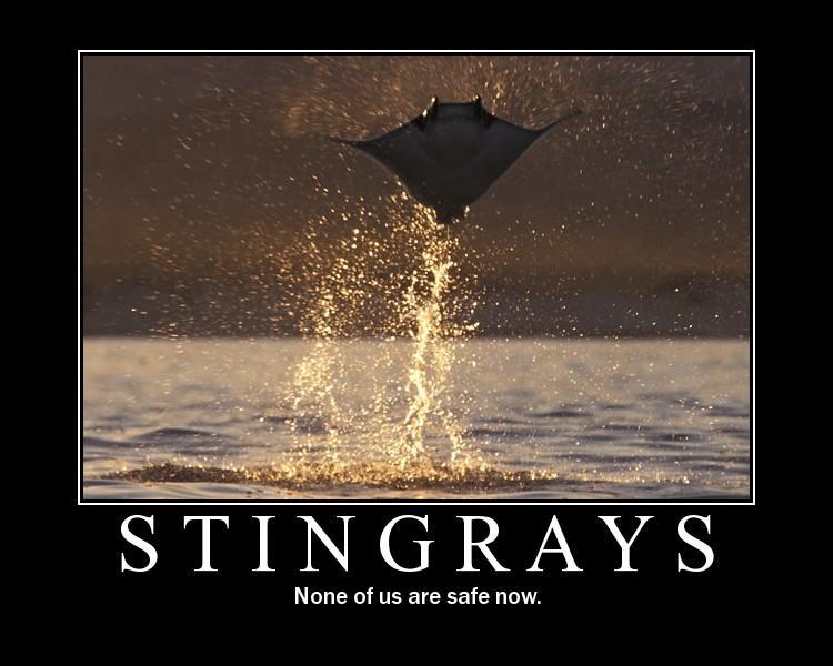 motivational-posters-stingrays-flying-out-of-the-w1