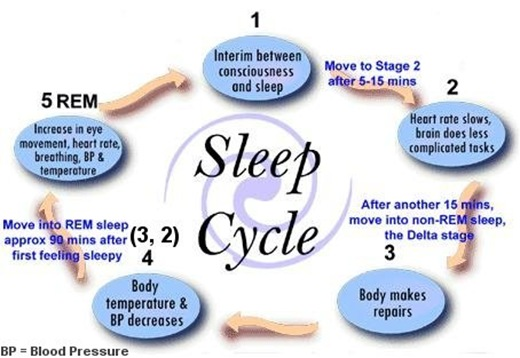 I1047stages thumb   The Sleep Cycle: Do You Get Enough Undisturbed Sleep?