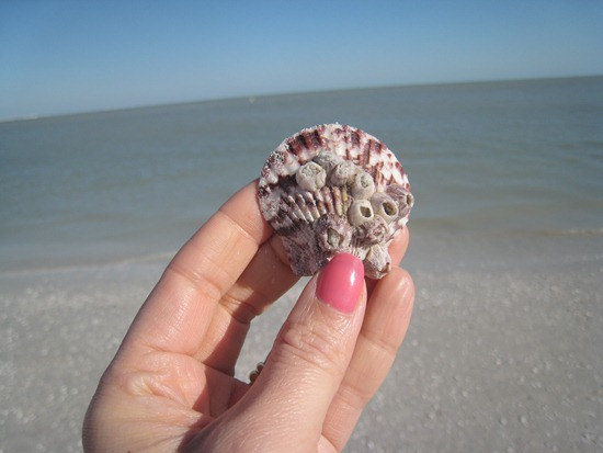 IMG 0131 thumb   Sarasota, FL
