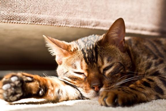 IMG 1449   Sleeping Beauty