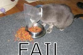 Cat%20-%20Fail