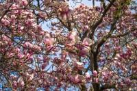spring-3136