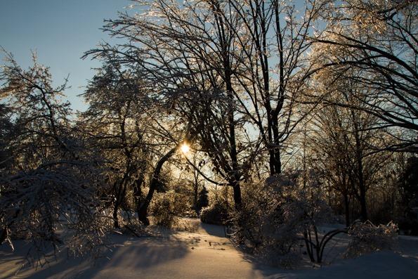 IMG 4575   Winter Wonderland