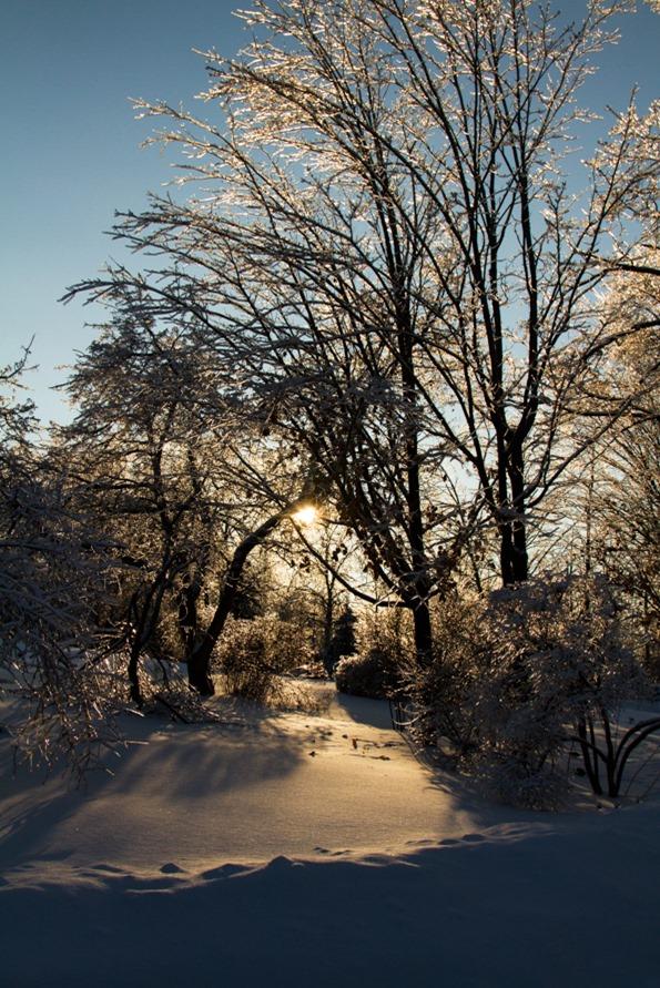 IMG 4576   Winter Wonderland