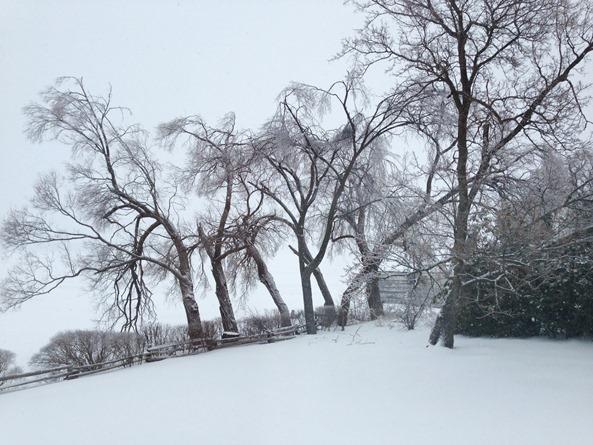 photo 7   Winter Wonderland