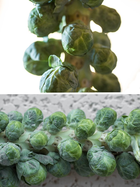 brusselssprouts2